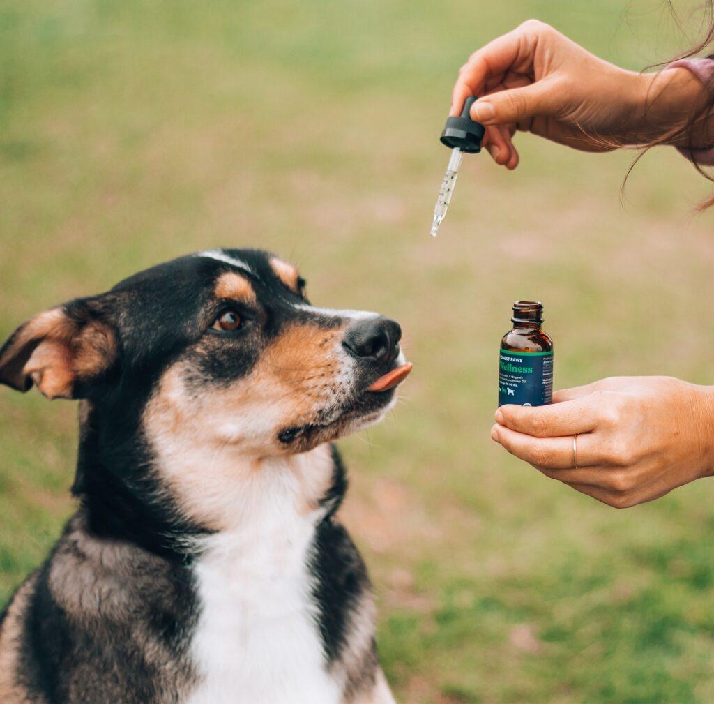 CBD Oils For Dog